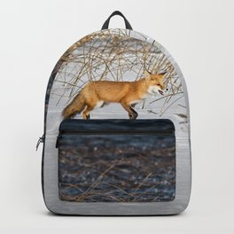Red Tail Fox on Fish Hook Lake Backpack