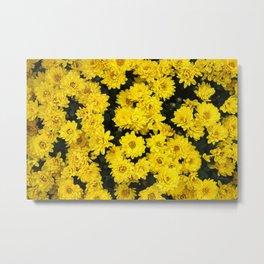 Chrysanthemum Flower Bed Metal Print