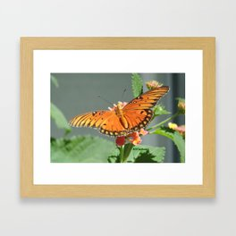 Gulf Fritillary on Lantana Framed Art Print