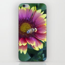 Bee working in a red Sunflower iPhone Skin