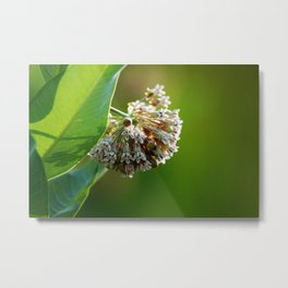 Out of the Green, in Bloom Metal Print