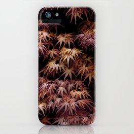Japanese Maple, Acer Palmatum Seigen iPhone Case