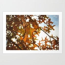 sun through autumn leaves Art Print