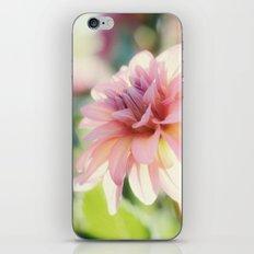 Dahlia 1 iPhone & iPod Skin