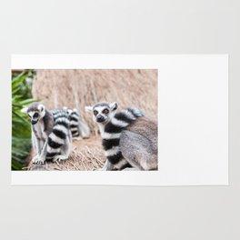 Ring-tailed lemur Rug