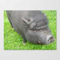 pigs Canvas Prints featuring Pigs by jls364