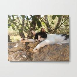Don't wake me up   Cute sleeping kitten in Corfu, Greece Metal Print