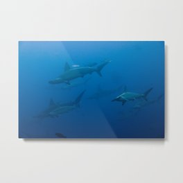 School of Hammerhead Sharks Metal Print