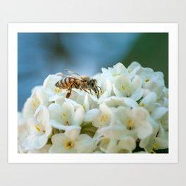 Bee In Garden Art Print