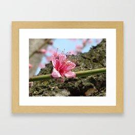 Cocktail Tree Flower Framed Art Print