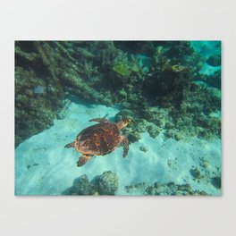 Tranquil Turtle Canvas Print