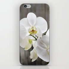 Pure Orchid iPhone & iPod Skin