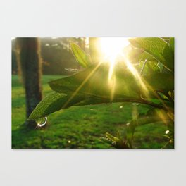 Good Morning, Sunshine Canvas Print