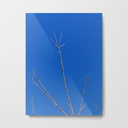 Tree Reaches for the Sky, with a Bony Hand Metal Print