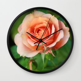 Garden pink rose flower blooming and two rose buds Wall Clock