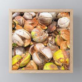 Coconut Husk Photography. Coir. Coconut Fibre. Coir Fibres Framed Mini Art Print