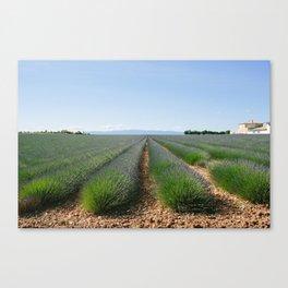 Valensole Lavender Canvas Print