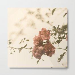 Lingering Roses Metal Print