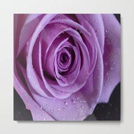 Purple Rose-3 Metal Print