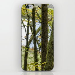Canal Through the Trees iPhone Skin