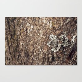 Tree Skin 3 /4 Canvas Print