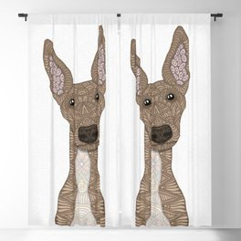 Cute Fawn Greyhound with white belly Blackout Curtain