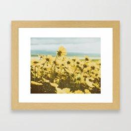 Sunlight Yellow Daisy Garden with Blue Sky Framed Art Print