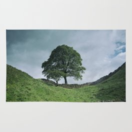 Back to Sycamore Gap Rug