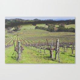 Anderson Valley Vineyard #2 Canvas Print