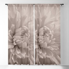 Monochrome chrysanthemum close-up Blackout Curtain