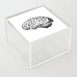 Brain Anatomy Acrylic Box