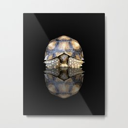Sulcata Tortoise with Reflection Metal Print