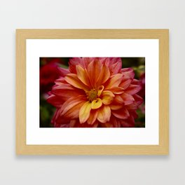 Beautiful Red Orange Flower Framed Art Print