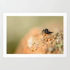 Spider Contemplating the Drop Art Print