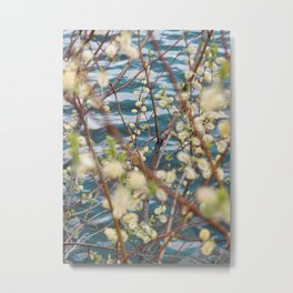 Blooming willow Metal Print