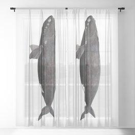 Northern right whale (Eubalaena glacialis) Sheer Curtain