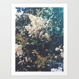 Amongst the Myrtle Tree Art Print