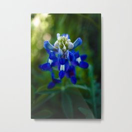 Bluebonnet in Spring Metal Print