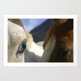 Horse Photo Art Print