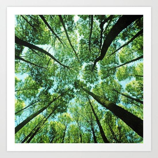 Looking up in Woods Art Print