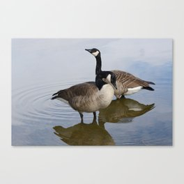 Pair of Canada Geese Canvas Print