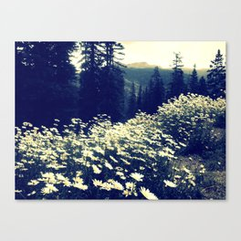Daisy fields of September Canvas Print