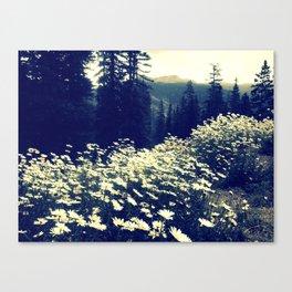 Daisy fields of September Canvas Print
