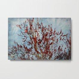 Spring Maple Tree Blooms Metal Print