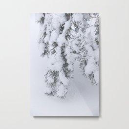 Winter's Pine 1 Metal Print