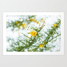 Palo Verde Flowers Art Print
