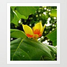 Mid Bloom Art Print