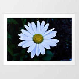 White and Yellow Daisy Art Print