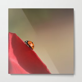 Ladybug on a Rose Metal Print