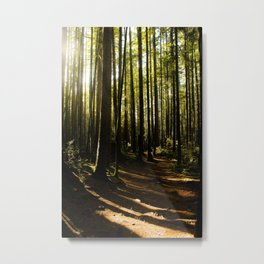 Trail of Shadows Metal Print